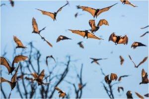 Murciélagos migrando