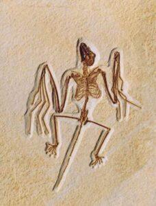 Fósil de murciélago